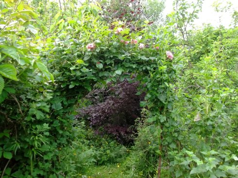 Another Rose arch at bealtaine Cottage