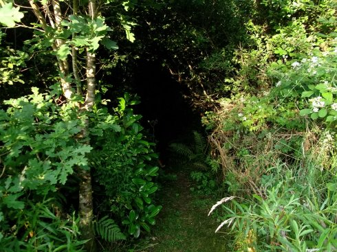 entrance to fairy wood at bealtaine cottage