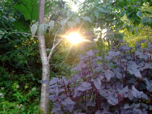 bealtaine cottage sunset