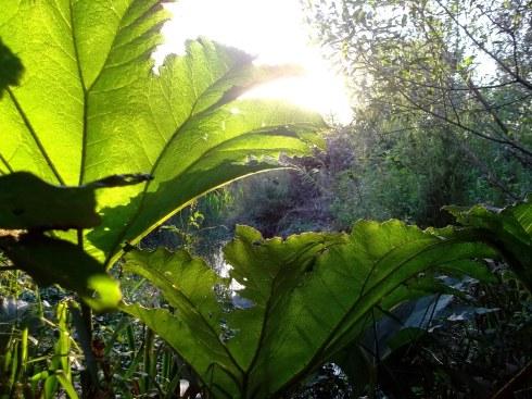 bealtaine cottage pond