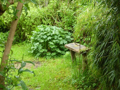 The lushness of Bealtaine Eve here at Bealtaine Cottage is merely a prelude to Summer and all to come...