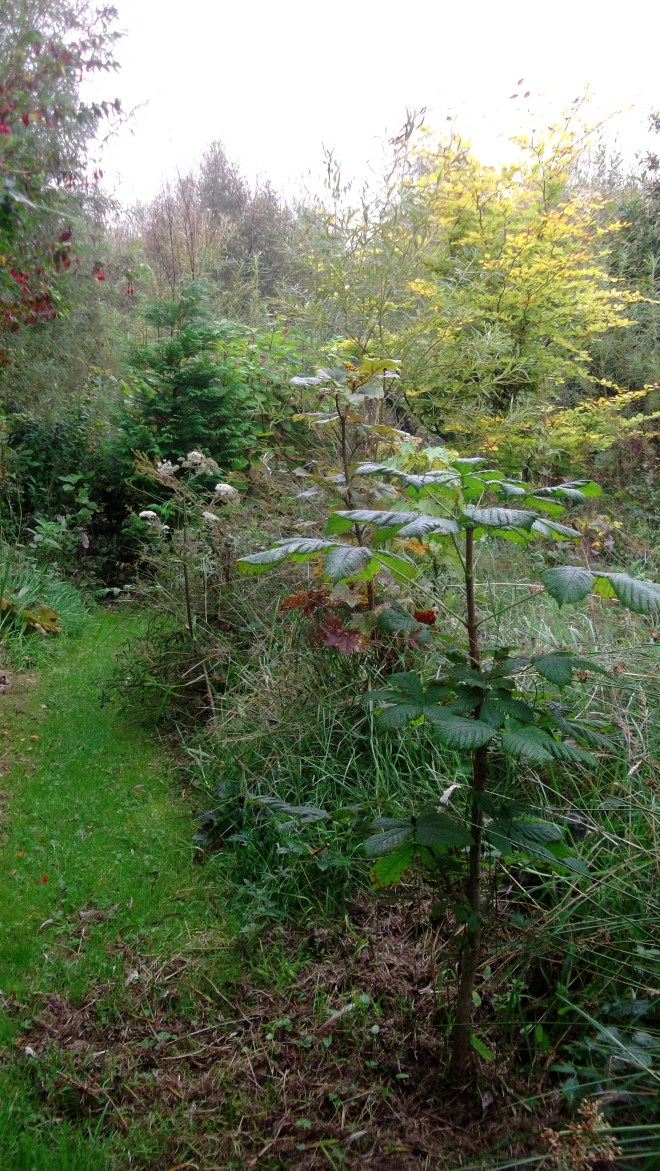 Autumn in permaculture at bealtainecottage.com 016