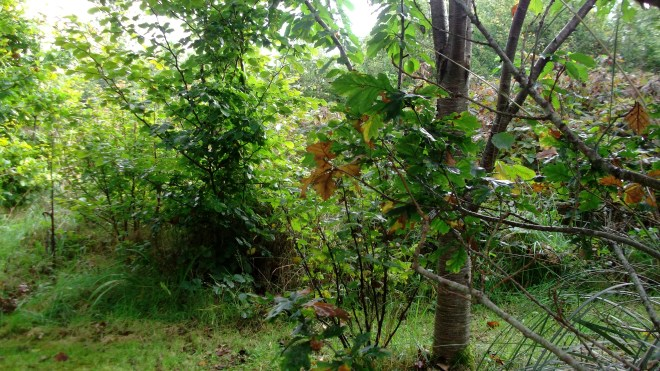 September Permaculture at bealtainecottage.com 002