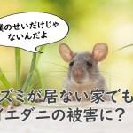 ネズミが居ない家でもイエダニの被害