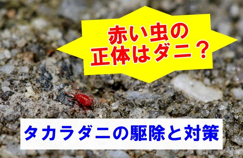 赤い虫小さい虫の正体