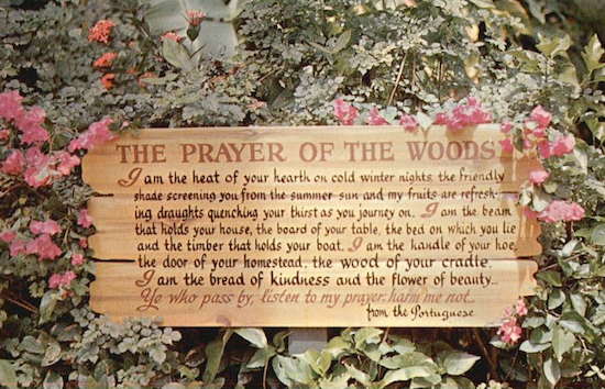 Analysis, Central Idea and Theme of The Prayer of the Woods