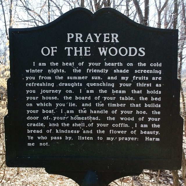Summary of The Prayer of the Woods