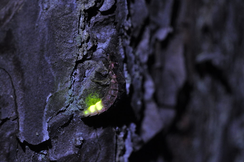 Summary of The Nightingale and the Glow-worm by Cowper