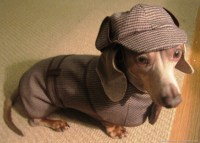 Sherlock Holmes Dog Costume | In My Spare Time