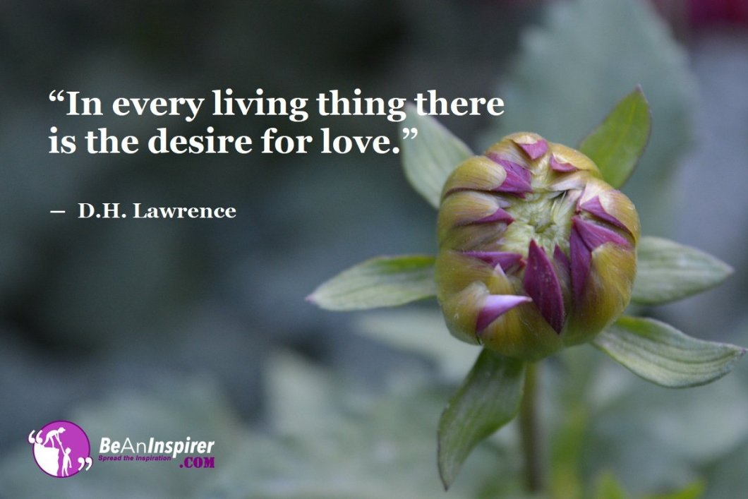 In-every-living-thing-there-is-the-desire-for-love-D-H-Lawrence-Top-100-Love-Quotes-Be-An-Inspirer