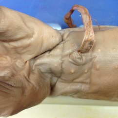 External Fetal Pig Muscle Diagram Ford Transit 2002 Radio Wiring May 2012 Ap Bio Dissection Our