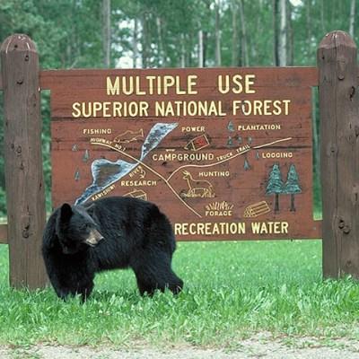 bear_at_kawishiwi_sign.jpg