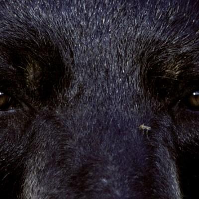 bear_eyes.jpg