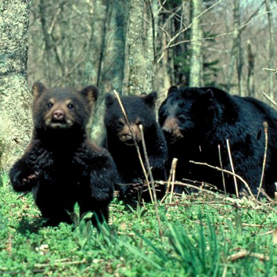mother_and_cubs.jpg
