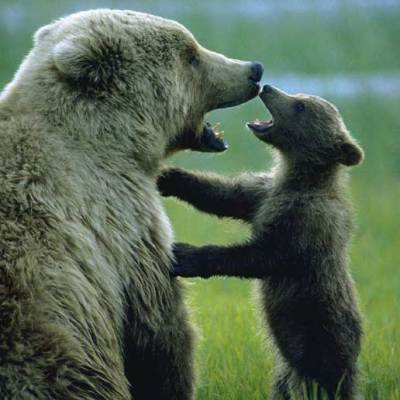 <h2>Spending quality time</h2> <pCertainly bears feel fear, but do they feel love, happiness, jealousy, anger, hope, humor, and playfulness? Is it closer to the truth to deny that bears have these emotions or to believe that they do?</p>