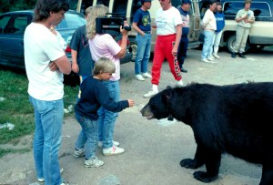 bear_with_crowd.jpg