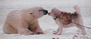 polar_bear_and_dog.jpg