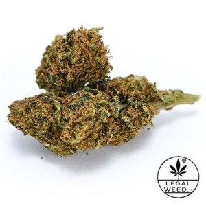 ALEXIS HAZE – Legal Weed