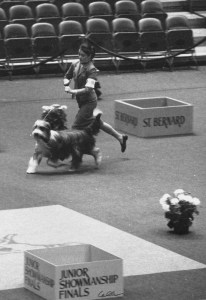WKC Junior Showmanship Finals 1984: Gail E Miller with CH Gaymardon's Bouncing Bogart. Photo credit: Callea. First Junior with a Beardie to place (2nd) at WKC.