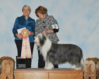 Best Veteran in Sweeps - GCH Old Smuggler's Front Runner