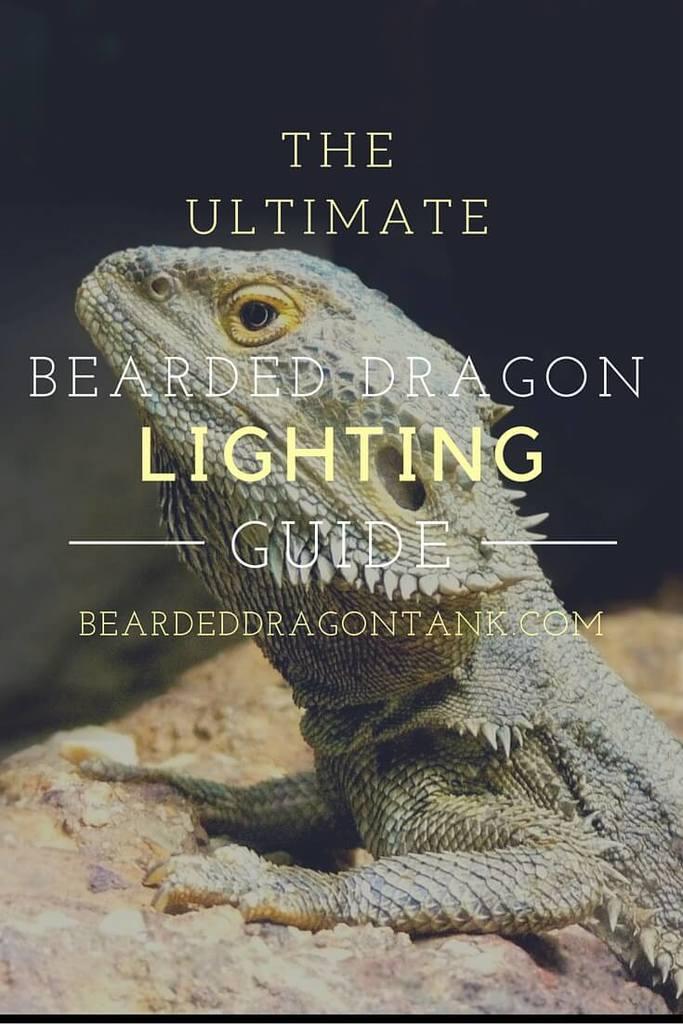 bearded dragon lighting