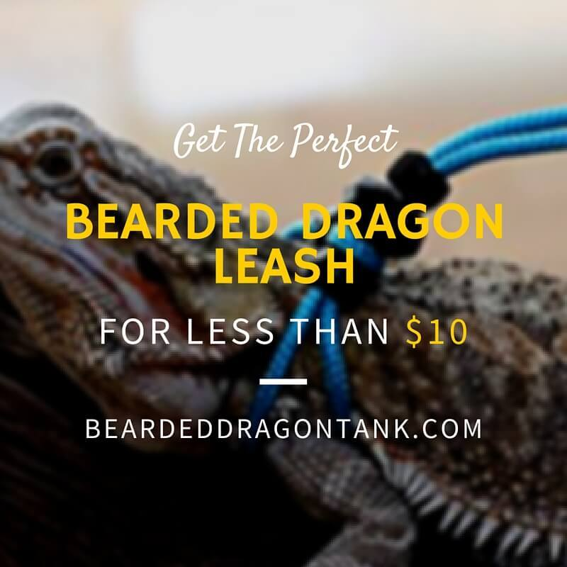 bearded dragon leash