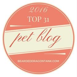 TOP 31 PET BLOG