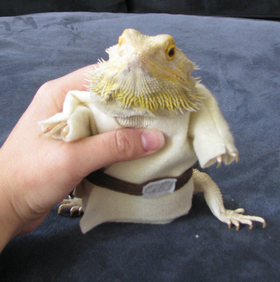 luke-skywalker-costume-for-bearded-dragons