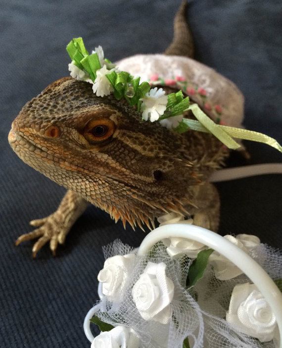 wedding-ready