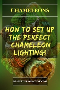 What You Need To Set Up The Perfect Chameleon Lighting ...