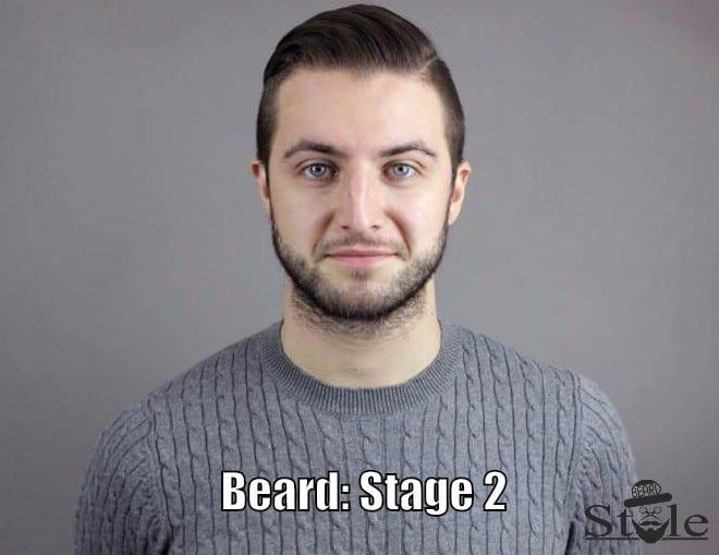 beard stage 2