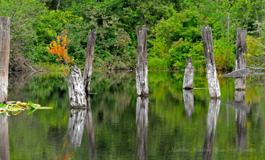 Pilings from a long-abandoned logging trestle across the Black River near Rochester, Washington