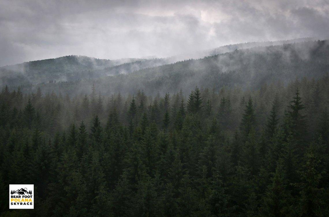 Tajomné lesy na Poľane