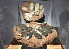 tiny-titans-dinosaur-eggs-and-babies-opens-sept-30