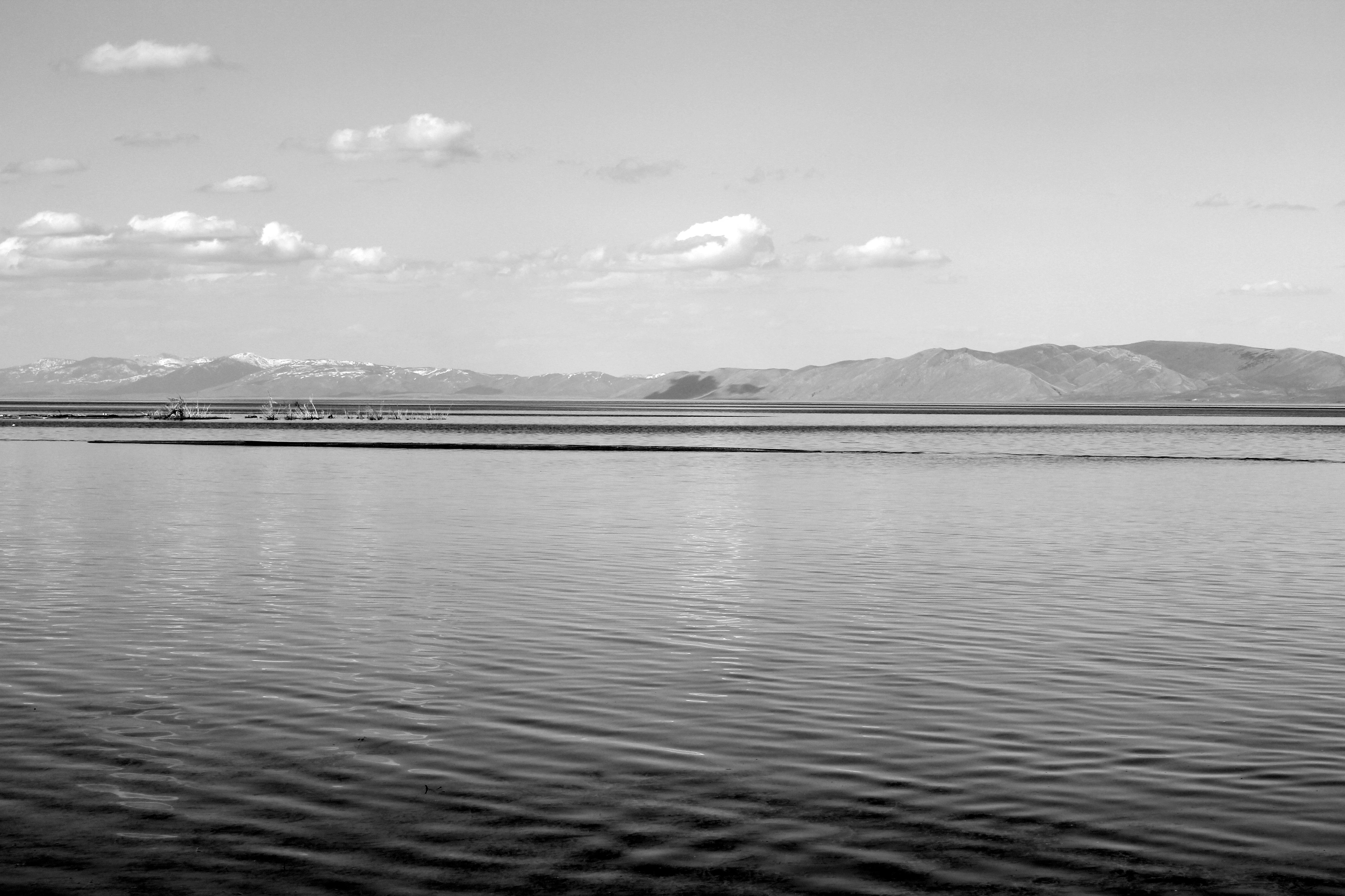 《何処湖の怪物(84)》強烈に長いシーサーペント【Intense long, Sea Serpent.】 : 13SHOE・高野十座のブログ