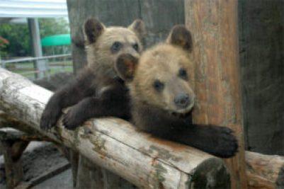「クマ牧場」の画像検索結果