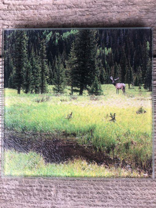 Elk In the Forest Trivet