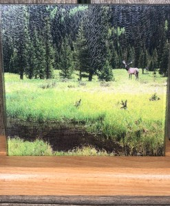 Elk In the Forest Trivet
