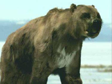 Bulldog Bear