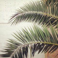 Palm Tree - Be artist Be art