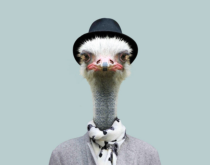 Zoo Portraits, Stylish Dressed Animals - by Yago Partal - be artist be art