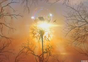 """DayDream"" Series, Fantasy Nature - by David Zuker"