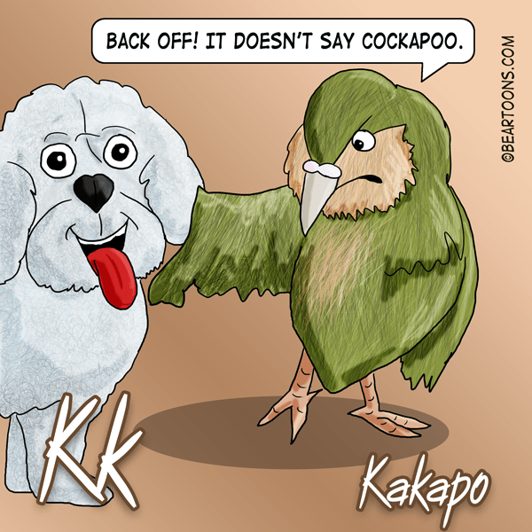 K-is-for-Kakapo-Animal-Alphabets-Bearman-Cartoons