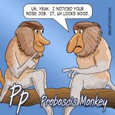 P-is-for-Proboscis-Monkey-Animal-Alphabets-Bearman-Cartoons