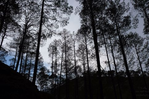 Travel Log – From 2073 to 2075, again teaching in Kunti Bandali 12