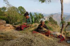 second week in Janalibandali 14