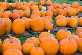 pumpkin-1795195__180