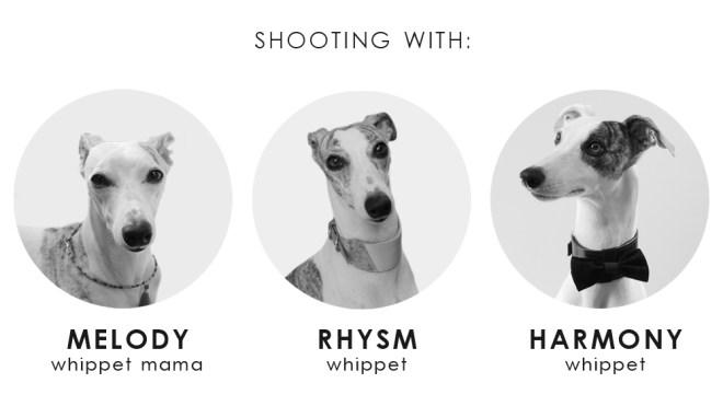 犬モデルのメロディー、リズム、ハーモニー(ウィペット) by BEAST COAST