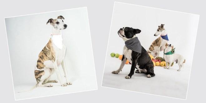 dogsnug-hivis-cooling-bandana-promotion