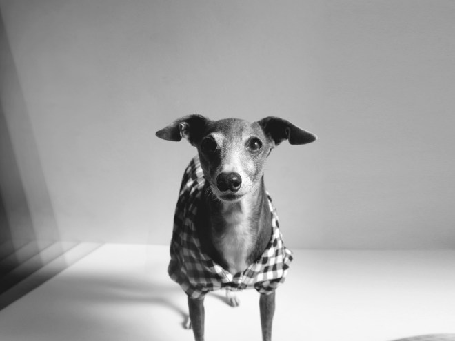Darco and Gingham check shirts by Dog threads from USA | BEAST COATS